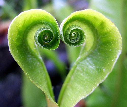 Natures Green Heart