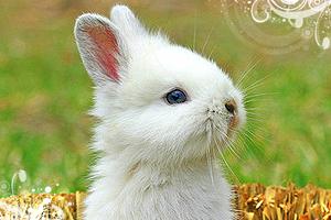 bunny thumb