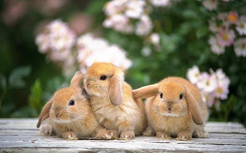 hamster or rabbit