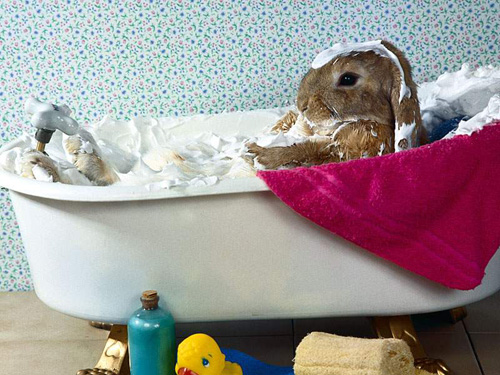 Mr. Rabbit Having Creme Bath