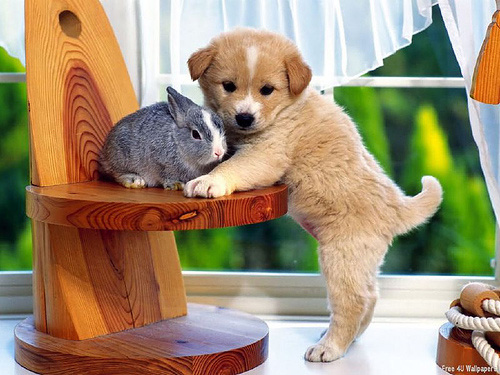 A puppy and a rabbit