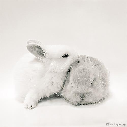 Snowy Bunnies