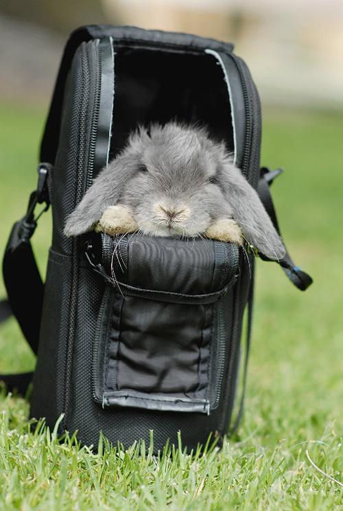 snug bunny