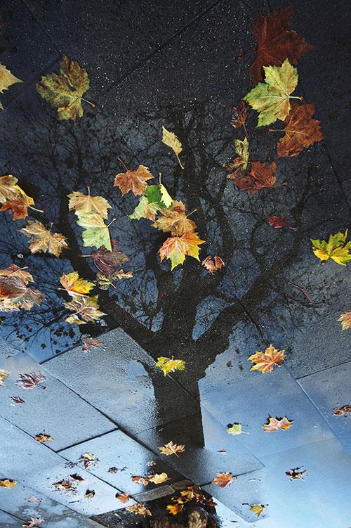 Autumn Resurrection