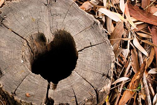 heart_stump